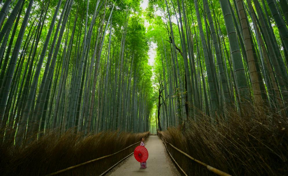 Kyoto Asrashiyama