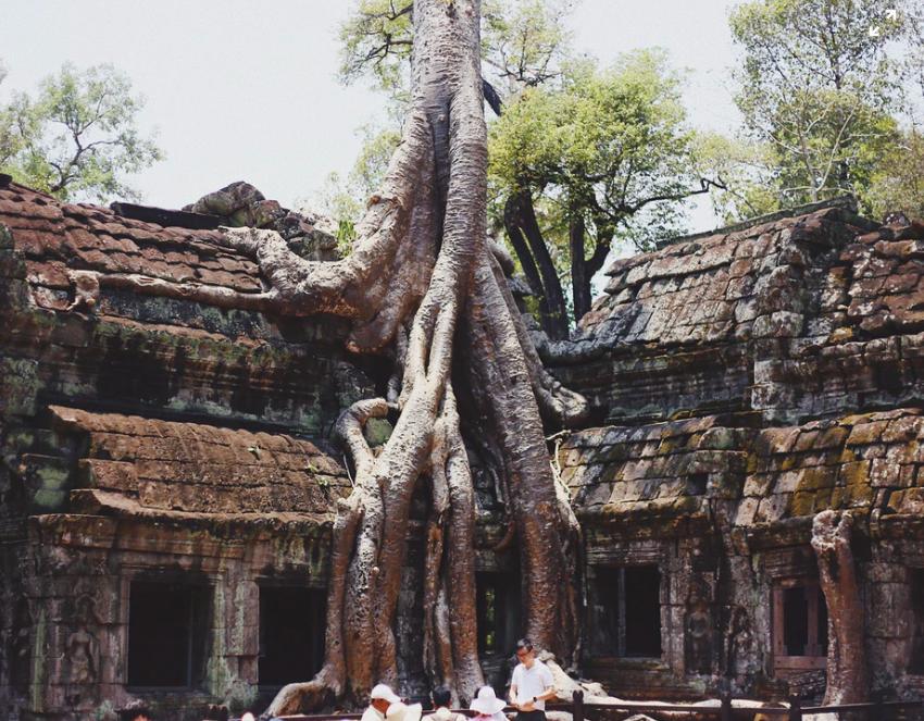 La naturaleza se abre paso en las viejas piedras del templo budista
